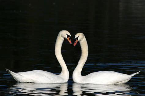 saint valentin     date  origine