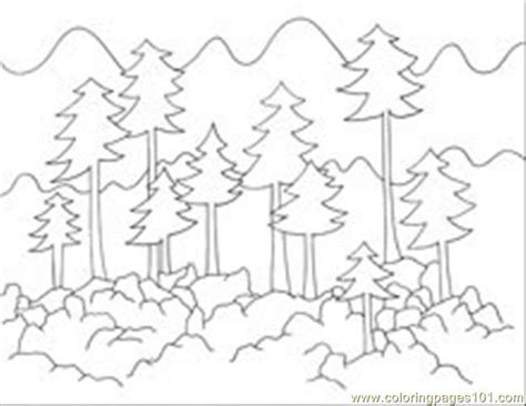 coloring pages forest tree forest background coloring pages