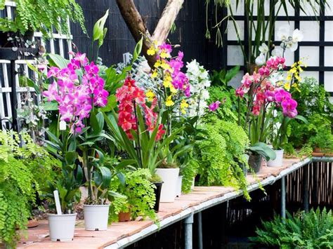 growing orchids successful gardening indoors and out an illustrated encyclopedia and practical gardening guide books in general a frosty can kill an orchid so many