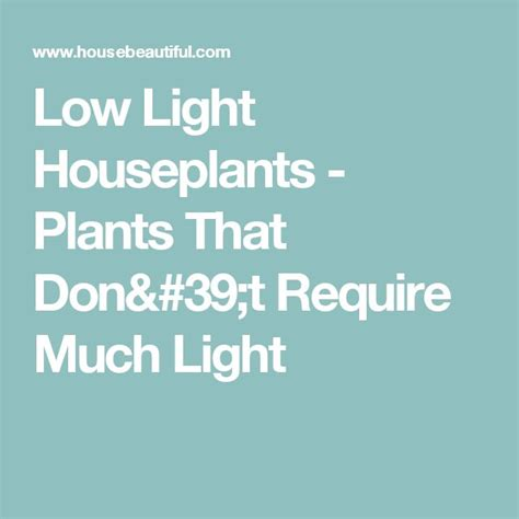 plants that dont need light best 20 low light houseplants ideas on pinterest indoor