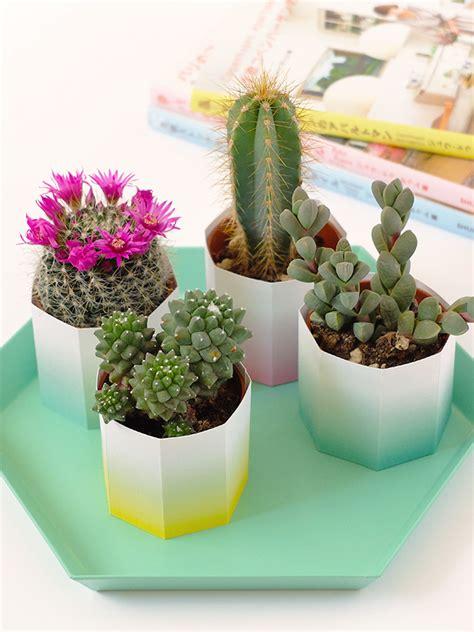 piante grasse in casa bluebells design piante grasse e tanto colore in casa
