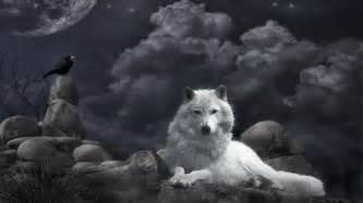 pics photos wallpaper hd wolf desktop backgrounds cool