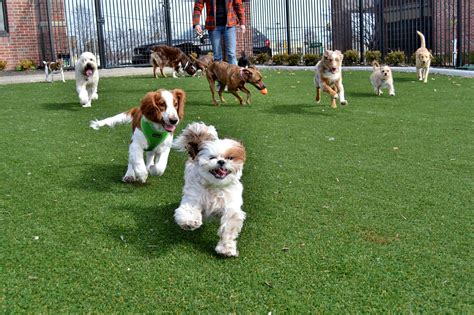 dogs at play daycare