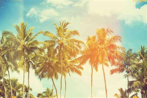 palm tree wallpaper wallpaper palm tree android apps on play
