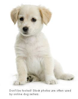 what to buy for a puppy buying a puppy is bad no pet store puppies