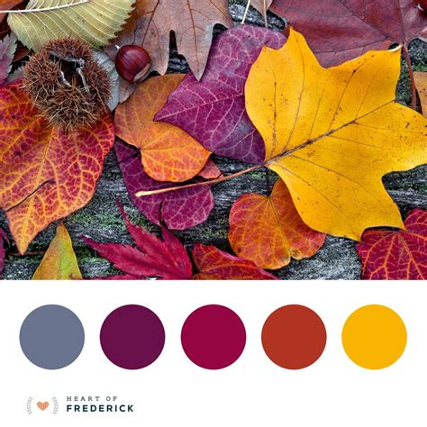 leaf colors beautiful fall leaves color palette frederickweddings