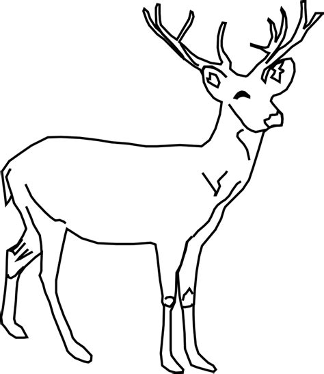 coloring pages of a deer printable deer coloring pages coloring home