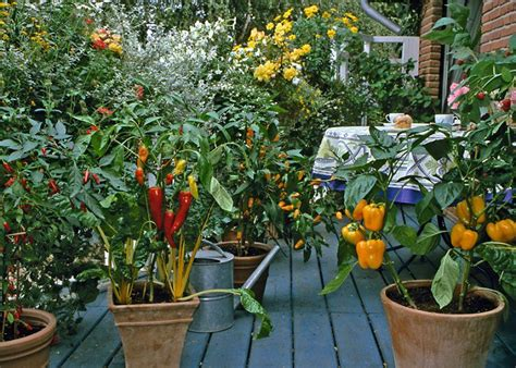 best vegetables for home garden small vegetable garden plans for a home garden axiom