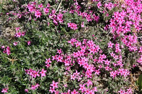 summer flower flowers that bloom all summer