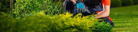 offerte lavoro giardiniere 10 migliori giardinieri a marino marino roma prezzi