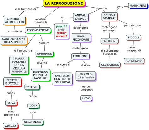 la riproduzione dei fiori el tiempo de implementaci 243 n mappa concettuale