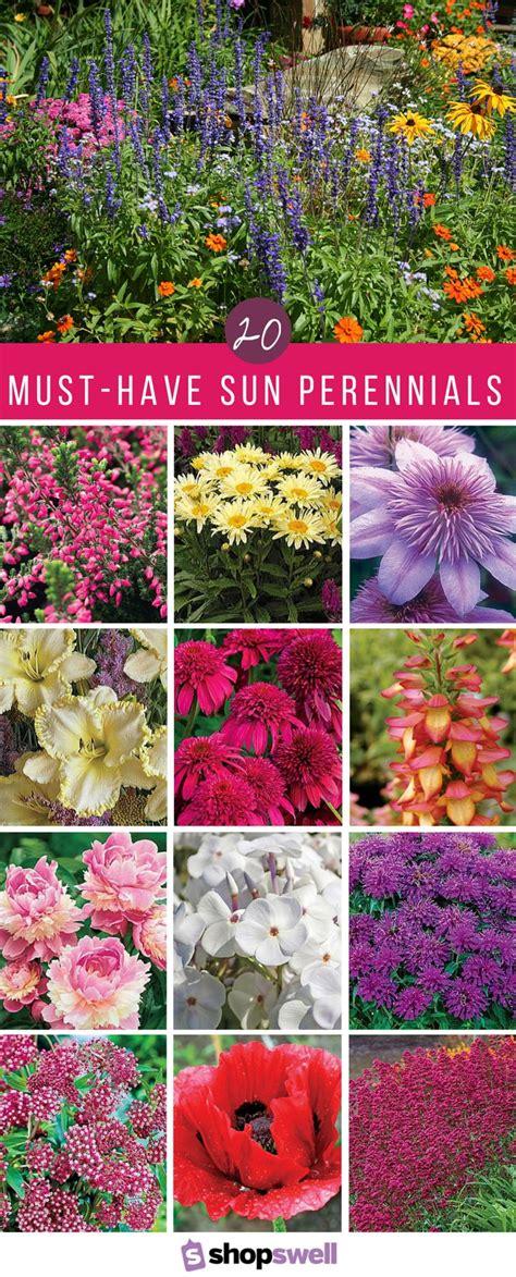 garden flower plants best 10 perennials ideas on perennial gardens