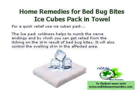 home remedy for bed bug bites home remedies for bed bug bites noble home remedies