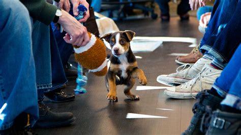 puppy bowl 2017 highlights gobi a puppy joined elite runner dion leonard on a 155 mile desert marathon