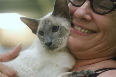 questions to ask a breeder top ten questions to ask a siamese cat breeder