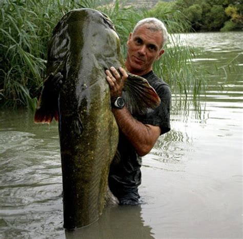 come cucinare il pesce siluro silurus glanis pesce siluro