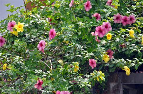bunga bunga indah  mudah tumbuh  rumah