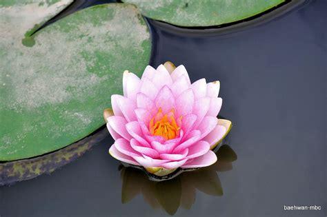 imagenes de rosas muy hermosas banco de im 193 genes flores muy hermosas by bae hwan 15