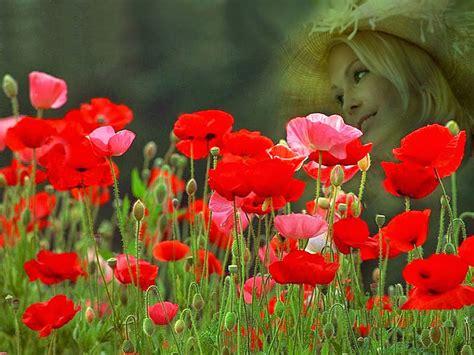 Red Rose Flower Garden Wallpaper http://refreshrose.blogspot.com/