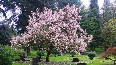 Records Portland Oregon River View Cemetery Portland Oregon Burial Records