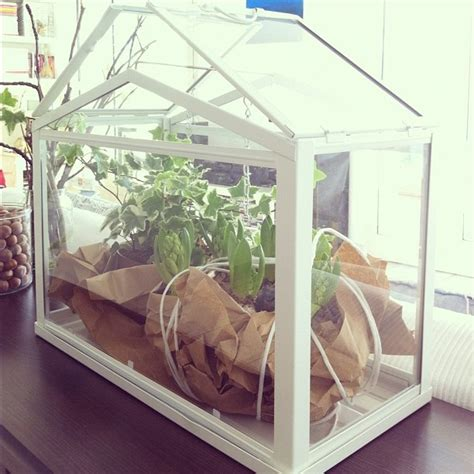 ikea mini greenhouse 17 best images about ikea greenhause on pinterest