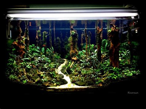 freshwater aquascaping ideas riversun s the forest the planted tank com