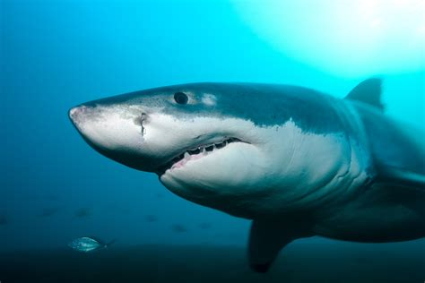what color are sharks here s why sharks are cool data mine us news