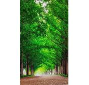 HD Background Green Forest Trees Straight Road Wallpaper