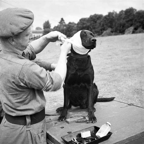 a brief history of the home post war 1945 present a brief history of british army dogs in world war 1