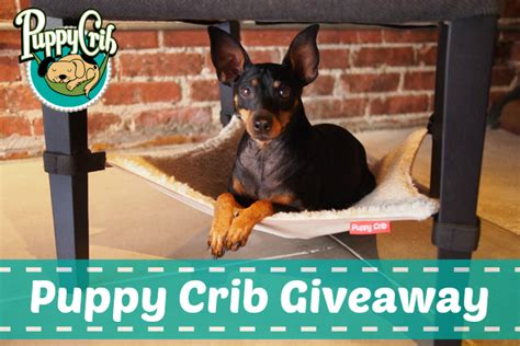 Free Puppy Giveaway - keeping a puppy friendly home with the puppy crib