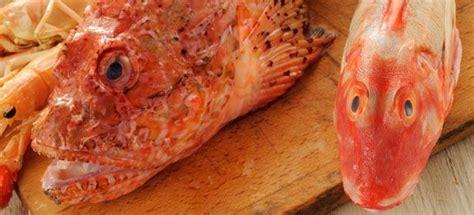 come cucinare pesce come cucinare pesce fresco cucinarepesce