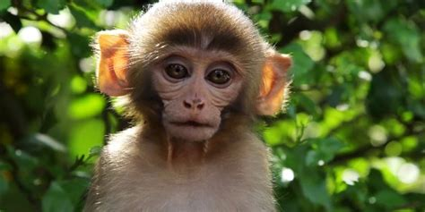monkey with image gallery monkeys