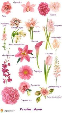 a florist is advertising five types of bouquets 163 beautiful types of flowers a to z with pictures
