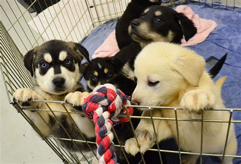 room of puppies creates puppy room to help stressed out