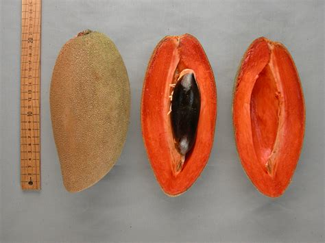 mamey color belize fruits 8 fruits to try when visiting belize