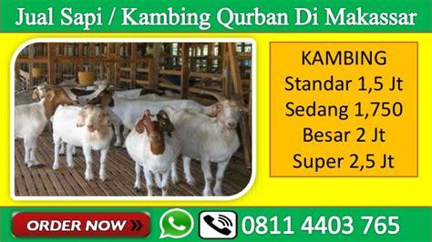 Jual Bibit Kambing Di Makassar wa 08114403765 jual kambing qurban di makassar 2017