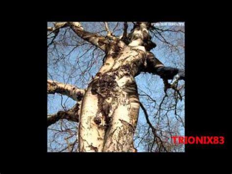 imagenes extranas naturaleza formas extra 241 as de la naturaleza caprichos de la
