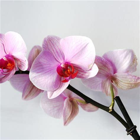 fiore per matrimonio i fiori piu belli per un matrimonio silviadeifiori