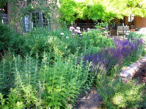 new mexico garden new mexico roots pinterest
