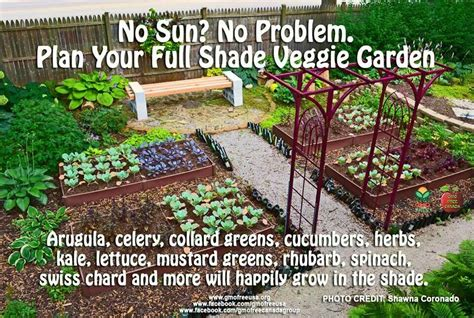 What Garden Vegetables Like Shade Shade Vegetables Image Only My Lil Garden