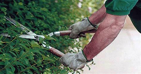lavori socialmente utili mobilità lavori socialmente utili per legnanesi in mobilit 224