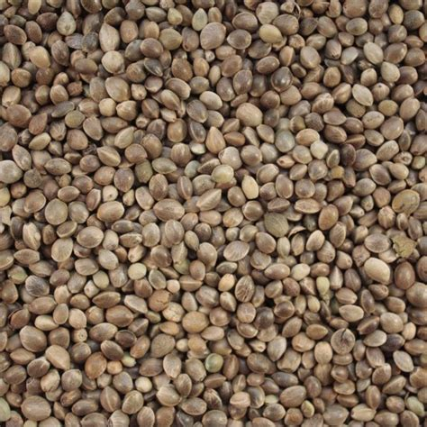 hemp seed for birds quality bird food british wild bird