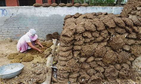 cow poop house india travellerspoint travel photography cow dung patties selling like hot cakes online in india