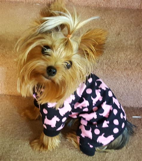 yorkie pajamas pajamas in black soft flannel with pink puppy print these pj s are for