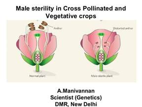 Flower Fertilization - male sterility in cross pollinated and vegetable crops