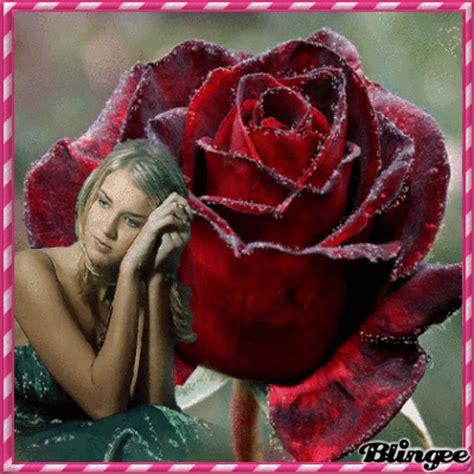 imagenes de rosas verdaderas hermosa como una rosa picture 128766929 blingee com