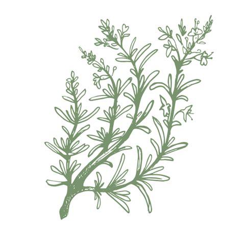 piante da arredamento piante da arredamento per farmacie mobili da esterno