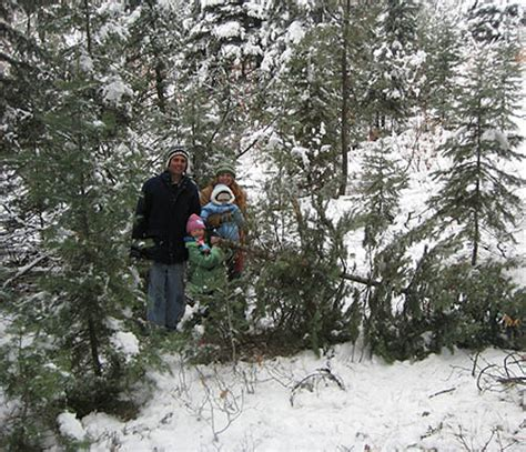 28 christmas tree permits durango colorado update
