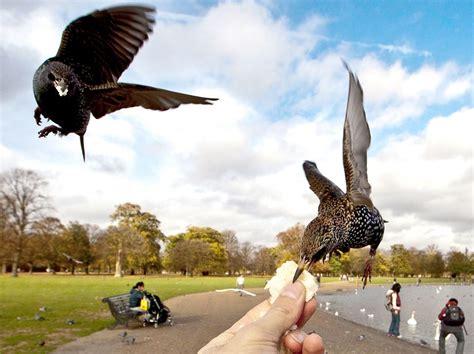 living hand to beak the birds happy to eat bread rolls