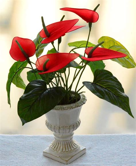 indoor flowers 10 easy to grow indoor plants in india interior design ideas